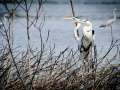 Lagoon Birds.jpg